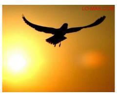 Psicoterapia Integral - Crecimiento Personal. Recobra tu libertad!